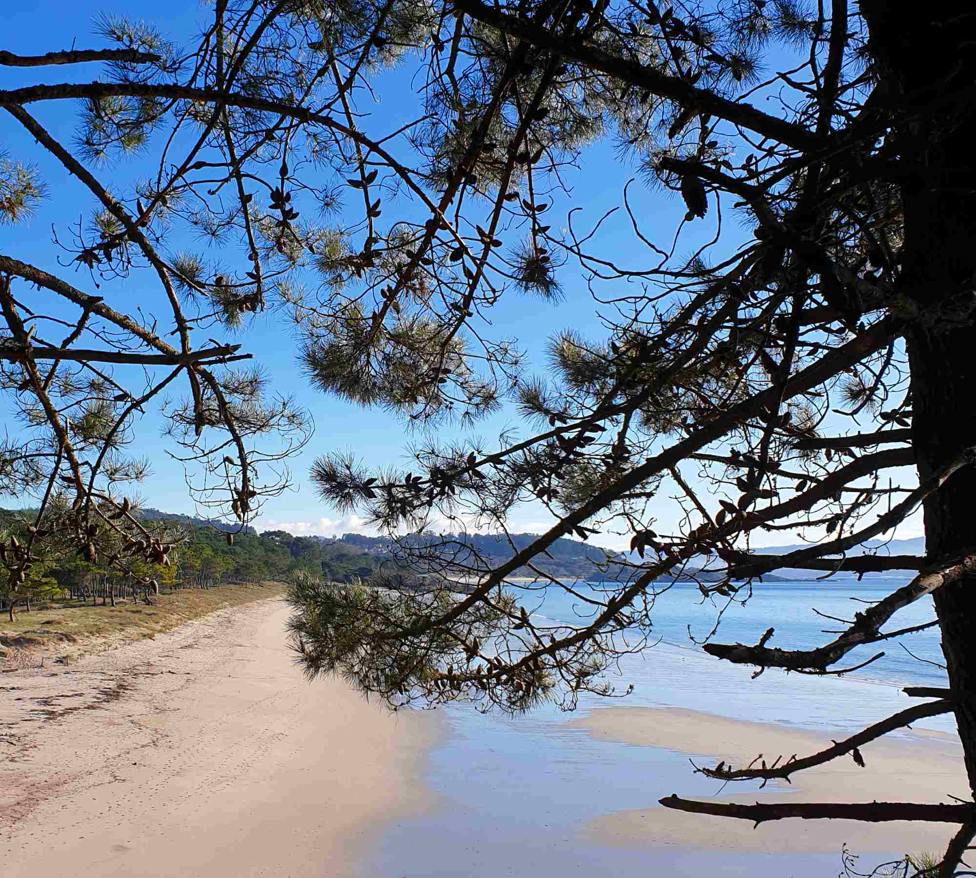 playa-pinos-costa