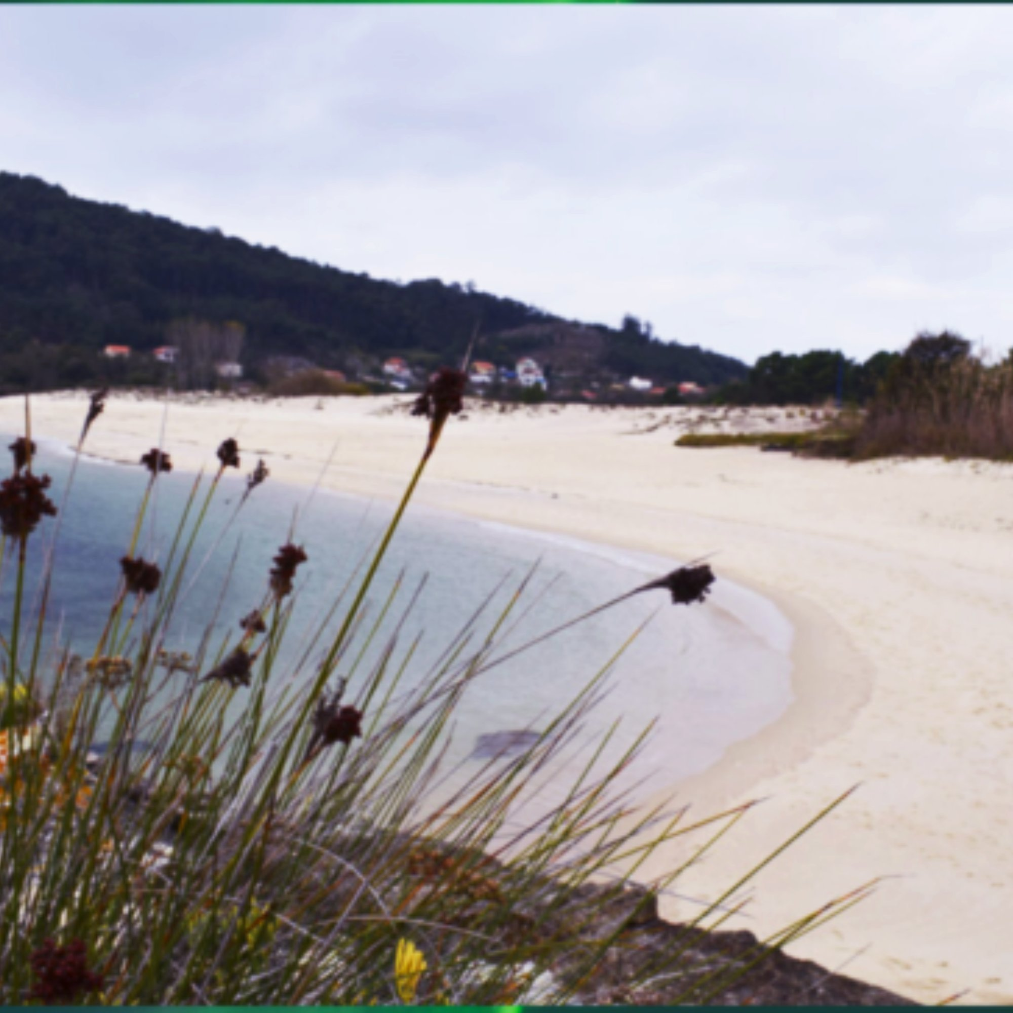 juncos-arena-playa-mar-casaomillon