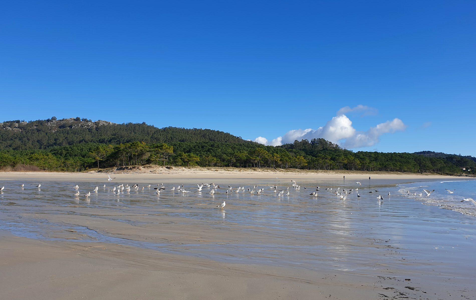 arena-playa-gaviotas-barra
